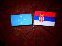 Micronesian flag with Serbian flag on a tree stump isolated. Micronesian flag with Serbian flag on a tree stump stock photo