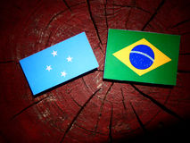 Micronesian flagga med den brasilianska flaggan på en isolerad trädstubbe royaltyfria foton