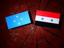 Micronesian flagga med den syrianska flaggan på en trädstubbe royaltyfri fotografi