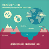 Microorganism life. Infographic illustration vector Stock Images