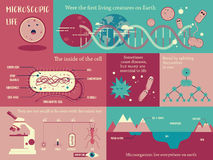 Microorganism life. Infographic illustration vector Royalty Free Stock Images