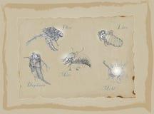 Microorganismos - un paquete dibujado mano Gráfico a pulso Imagen de archivo