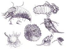 microorganisms royaltyfri illustrationer