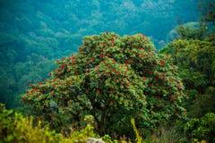 Microphyton ou Laligura do rododendro foto de stock royalty free