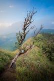 Microphyton ou Laliguras do rododendro foto de stock