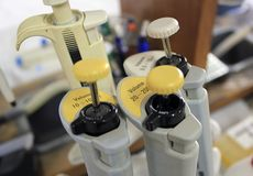 Micropipetas. Micropipettes in genetics laboratory, Spain Stock Photography