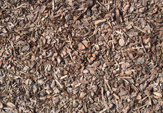 Microplaqueta de madeira molhada fresca do pinheiro, textura da natureza Imagem de Stock Royalty Free