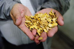 Microplaquetas ao close up da salsicha do fumeiro Imagem de Stock