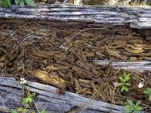 Microplaquetas de madeira de tronco de árvore. Imagem de Stock