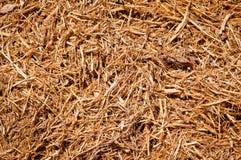 Microplaquetas de madeira do Mulch Fotos de Stock Royalty Free