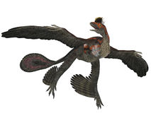 Microraptor Dinosaur Profile Stock Photos
