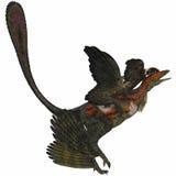 Microraptor su bianco Immagini Stock