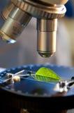 Microscope in bio laboratory Royalty Free Stock Image
