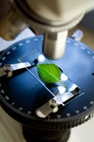Microscope in bio laboratory Stock Images