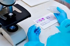 Microscope. Microbiological laboratory. Mold and fungal cultures. Bacterial research. Microbiology.  stock photos