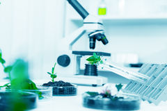 Microscopi moderni in un laboratorio Fotografia Stock Libera da Diritti