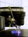 Microscopia di fluorescenza Fotografie Stock Libere da Diritti