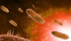 Microscopic bacteria in orange background royalty free illustration