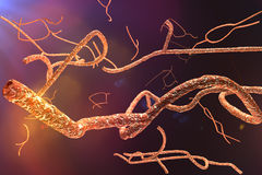 Microscopic Ebola Virus Royalty Free Stock Image