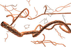 Microscopic Ebola Virus Stock Image