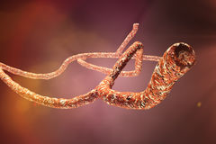 Microscopic Ebola Virus Stock Photography