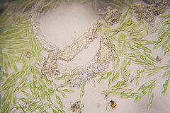 Microscopic organisms from the pond. Euglena Gracilis. Microscopic organisms from the pond water. Euglena Gracilis stock image