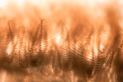 Microscopic shot of Cristatella mucedo moss animal tentacles Stock Image