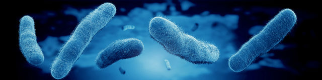 Microscopic view bacteria. Microscopic view of vibrio vulnificus bacteria Royalty Free Stock Images