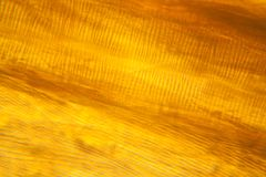 Microscopic view of moth wing Royalty Free Stock Image