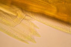 Microscopic view of moth wing Royalty Free Stock Photo