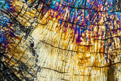 Microscopic Xylose crystals Stock Images