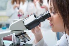 Microscopio Fotos de archivo libres de regalías
