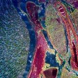 Microscopische sectie van menselijke nier Stock Foto