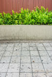 Microsorum punctatum fern, batten wooden fence and pavement. The small garden for exterior decoration stock photo