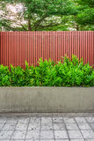 Microsorum punctatum fern, batten wooden fence and pavement Royalty Free Stock Images