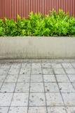 Microsorum punctatumormbunke, plankaträstaket och trottoar Arkivfoto