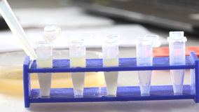 Microtubes. Filling the pipette microtubes Filling the pipette microtubes stock footage