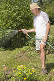 Mid age man watering the garden Stock Images