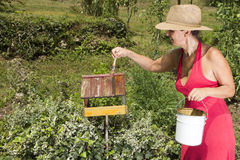 Mid age woman painting bird house. Smiling mid age woman with straw hat, painting old bird house outside stock photo