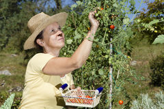 Mid aged woman doing some gardening Stock Photos