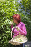 Mid aged woman picking elder blossoms Stock Photo