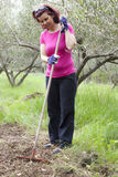 Mid aged woman working in olive plantation Royalty Free Stock Image
