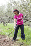 Mid aged woman working in olive plantation Stock Photography