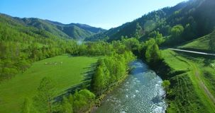 Mid-air flight over fresh mountain river and meadow at sunny summer morning. Rural dirt road below. stock footage