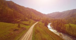 Mid air flight over fresh mountain river and meadow at sunny summer morning. Rural dirt road below. Cows and car. Aerial UHD 4K view. Mid-air flight over fresh stock video footage