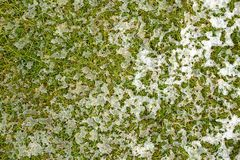 Mid-high lawn with melting snow texture. Park lawn texture. Top view, overhead shot. Grassplot surface backdrop. stock photos