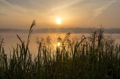 Mid-morning over lake. Grass and water at sunrise stock images