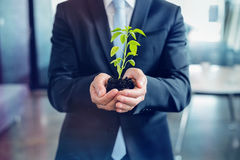 Mid section of businessman holding plant Stock Photography