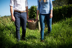 Mid section of couple carrying fruits in wicker basket at farm Stock Photos