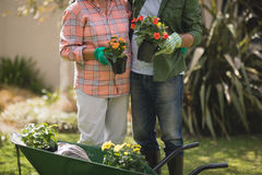 Mid section of senior couple holding potted plants by wheel borrow in yard. Mid section of senior couple holding potted plants while standing by wheel borrow in royalty free stock photo